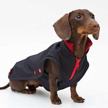 Hunde-Bekleidung